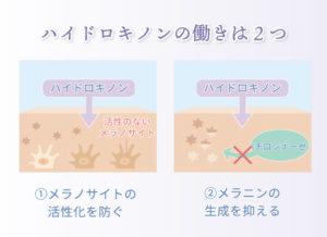 ハイドロキノンの働きは2つ ①メラノサイトの活性化を防ぐ②メラニンの生成を抑える