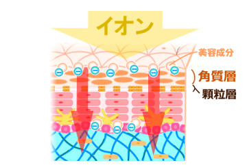 イオン導入の仕組みについて
