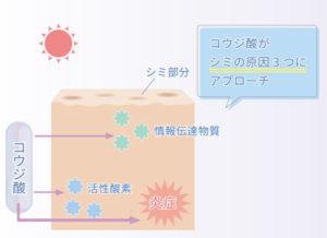 コウジ酸の美容効果の仕組み