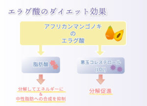 エラグ酸のダイエット効果 アフリカンマンゴノキのエラグ酸 脂肪酸 分解してエネルギーに&中性脂肪への合成を抑制  悪玉コレステロール(LDL) 分解促進