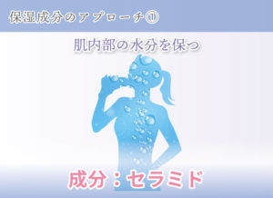 保湿成分のアプローチ① 肌内部の水分を保つ 成分:セラミド