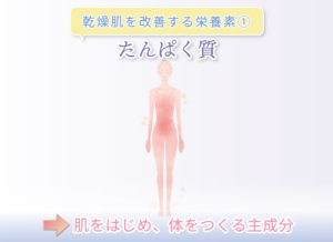 乾燥肌を改善する栄養素① たんぱく質 →肌をはじめ、体をつくる主成分