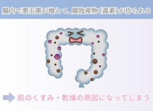 腸内で悪玉菌が増えて、腐敗産物(毒素)が作られる →肌のくすみ・乾燥の原因になってしまう