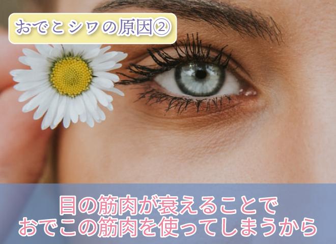 おでこシワの原因② 目の筋肉が衰えることで おでこの筋肉を使ってしまうから